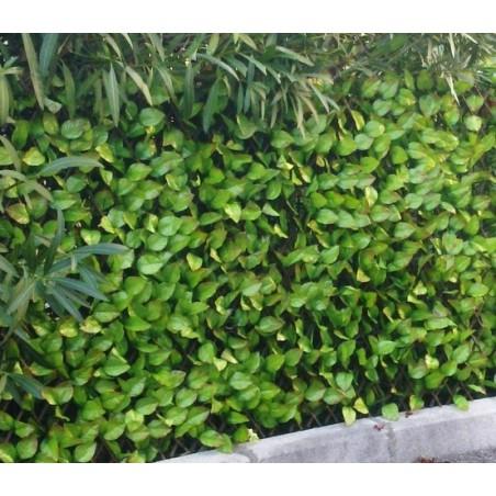 Brise-vue treillis feuilles de rosier 1x2 m