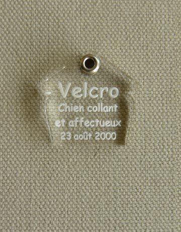 Medaille pour chien transparente niche, Transparente: Incolore