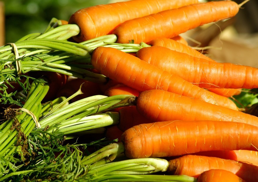 Comment bien conserver les carottes?