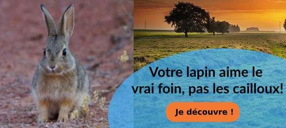 Foins de crau lapins